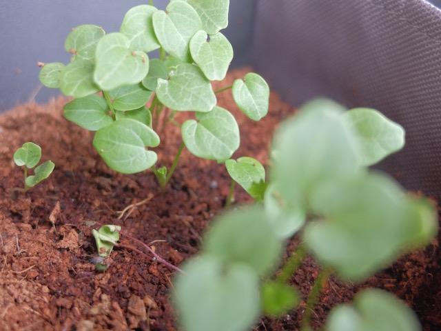 box-jardinage-poussepousse