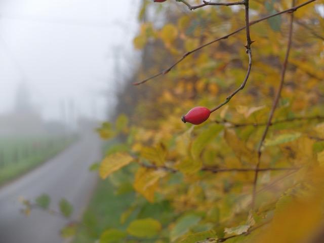 photo_nature_slowlife